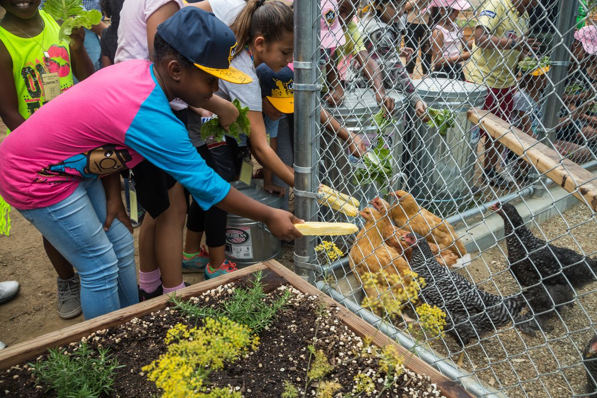 Students from 186th Street Elementary School visit the chicken coop at StubHub Center
