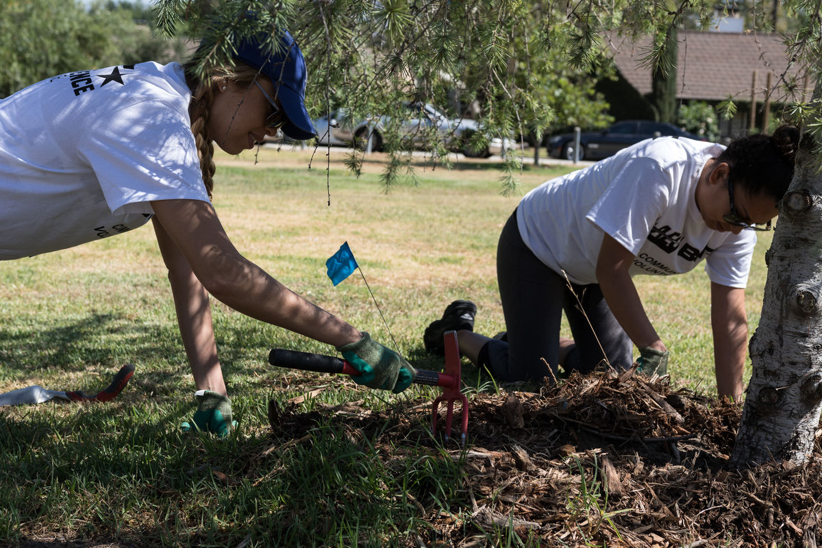 Employee volunteers clear weeds around newly planted trees at Griffith Park in Los Angeles during AEG and BET's annual service day in conjunction with BET Experience at L.A. LIVE and the BET Awards.