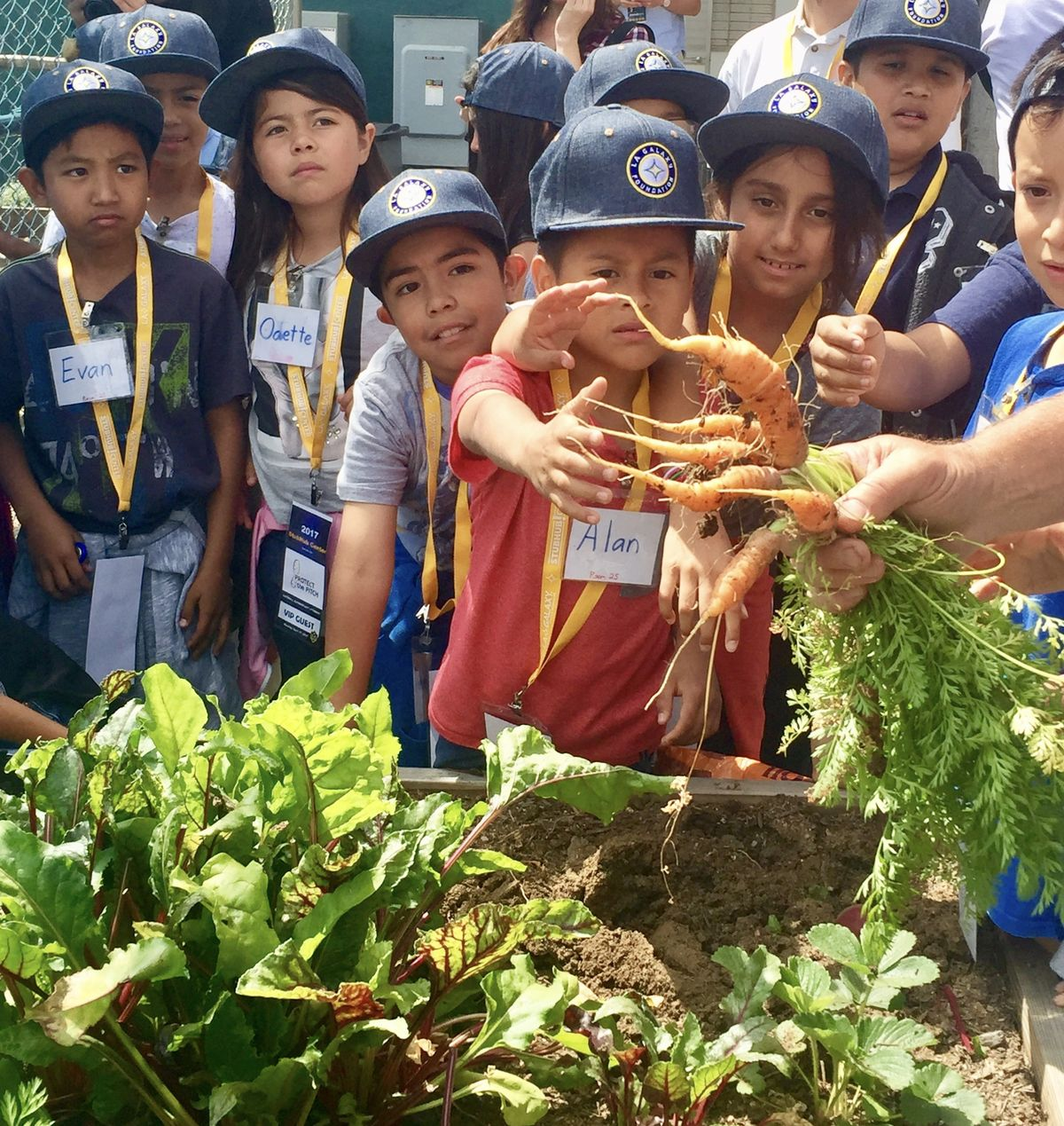 Students from Catskill Avenue Elementary explore StubHub Center's greenhouse and examine a newly uprooted carrot on April 17, 2017. StubHub Center's greenhouse produces numerous types of vegetables to provide food for tenants at the stadium.