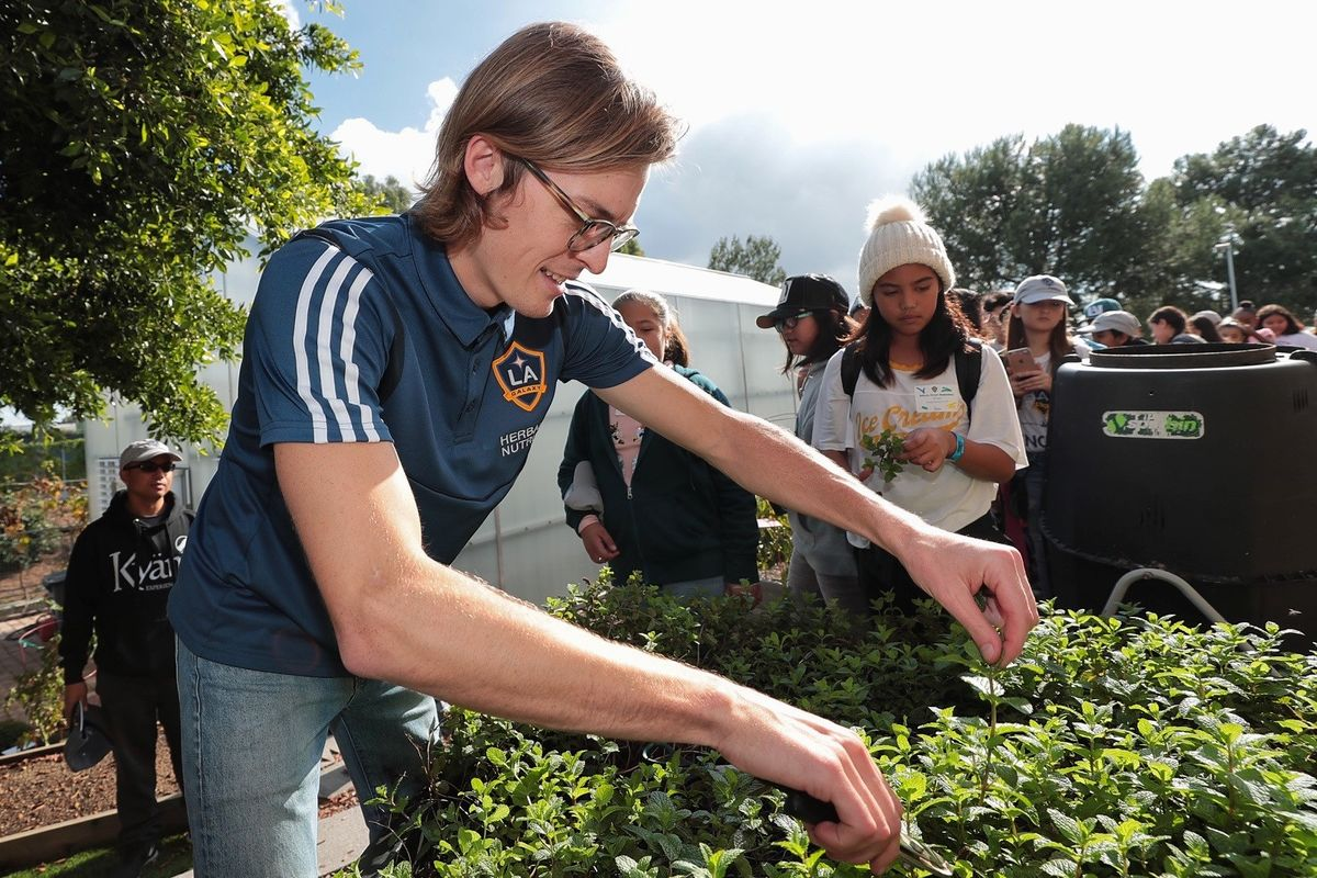 An LA Galaxy employee harvest mint from the garden at Dignity Health Sports Park for a class of students visiting the arena.